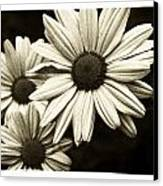 Daisy 2 Canvas Print by Tanya Jacobson-Smith