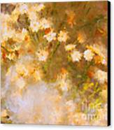 Daisy A Day 21 Canvas Print by Julie Lueders