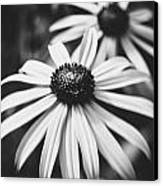 Daisy In The Dark Canvas Print