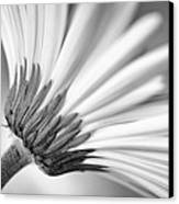 Daisy Noir Canvas Print by Christi Kraft