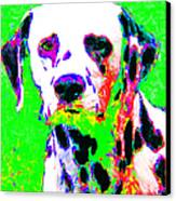 Dalmation Dog 20130125v3 Canvas Print by Wingsdomain Art and Photography