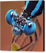 Damselfly Canvas Print by Walter Klockers