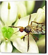 Dancefly On Onion Flower Canvas Print by Walter Klockers