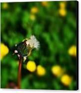 Dandelion In Spring Canvas Print by John Magnet Bell