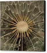 Dandelion Seed Pod Canvas Print by Elery Oxford