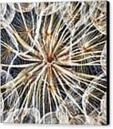 Dandelion Canvas Print by Stelios Kleanthous