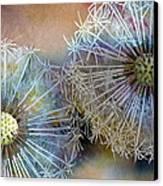 Dandelions Canvas Print by John Christopher Bradley