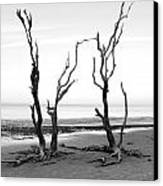 Dancing Trees Canvas Print by Thomas Leon