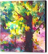 Dappled - Light Through Tree Canopy Canvas Print