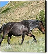 Dark And Wild Horse Canvas Print by Sabrina L Ryan