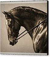 Dark Dressage Horse Old Photo Fx Canvas Print by Crista Forest