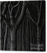 Dark Forest Canvas Print by Heiko Koehrer-Wagner