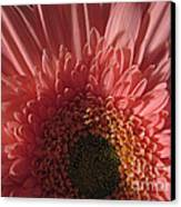 Dark Radiance Canvas Print