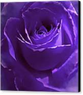 Dark Secrets Purple Rose Canvas Print by Jennie Marie Schell
