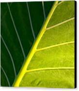 Darkness And Light - Elephant Ear Leaf Details Canvas Print
