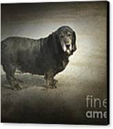 Dawg Canvas Print by The Stone Age