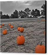 Day Of The Pumpkins Canvas Print by Thomas  MacPherson Jr