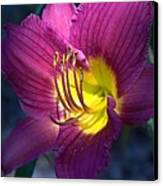 Daylily Canvas Print by Edward Hamilton