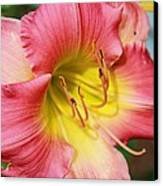 Daylily Canvas Print by Victoria Sheldon