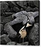 Dead Pelican Trash And Creosote Covered Rocks Canvas Print