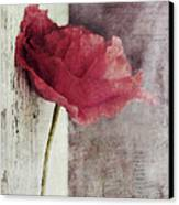 Decor Poppy Canvas Print by Priska Wettstein