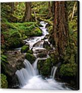 Deep In The Forest Canvas Print by Pamela Winders
