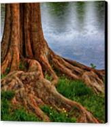 Deep Roots - Tree On North Carolina Lake Canvas Print by Dan Carmichael