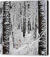 Deep Snow In The Forest Canvas Print