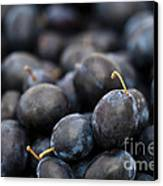 Deeply Damson Canvas Print by Anne Gilbert