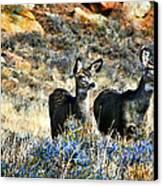 Deer Alert Canvas Print by Rebecca Adams