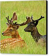 Deer Lying In A Field Canvas Print by DerekTXFactor Creative