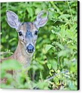 Deer Me Canvas Print by Joe McCormack Jr