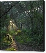 Del Monte Forest Pacific Grove Ca Canvas Print