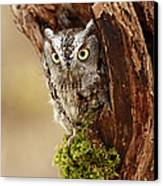 Delighted By The Eastern Screech Owl Canvas Print by Inspired Nature Photography Fine Art Photography