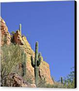 Desert Plants Of The Superstitions Canvas Print