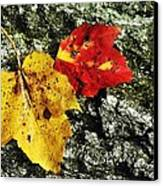 Deux Feuilles Canvas Print by JAMART Photography