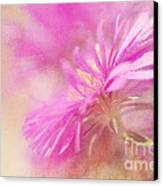 Dewy Pink Asters Canvas Print by Lois Bryan