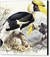 Dichocerus Bicornis Canvas Print