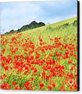 Digital Art Field Of Poppies Canvas Print by Natalie Kinnear