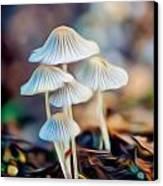 Digital Art Mushrooms Canvas Print by Tammy Smith