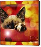 Disco Kitty 2 Canvas Print by Andee Design