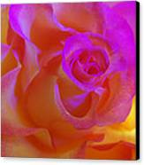 Disco Rose   Canvas Print