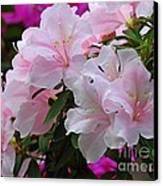 Divine Pink Azalea Canvas Print