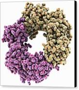 Dna Polymerase IIi Subunit Molecule Canvas Print