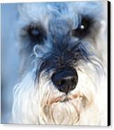 Dog 2 Canvas Print by Wingsdomain Art and Photography