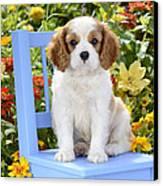 Dog On Blue Chair Canvas Print by Greg Cuddiford