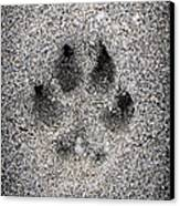 Dog Paw Print In Sand Canvas Print by Elena Elisseeva