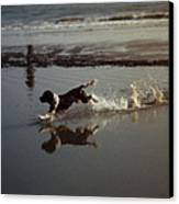 Dog Running Canvas Print by John Magnet Bell
