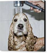 Dog Taking A Shower Canvas Print by Mats Silvan
