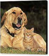 Dog With Kitten Canvas Print by Rolf Kopfle